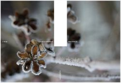 15_winter2